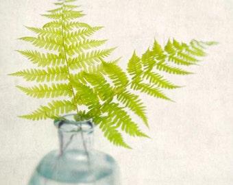 Fern Print, Fine Art Photography Print, Nature Art Print, Fern Art, Woodland Decor, Fern Home Decor, Wall Art