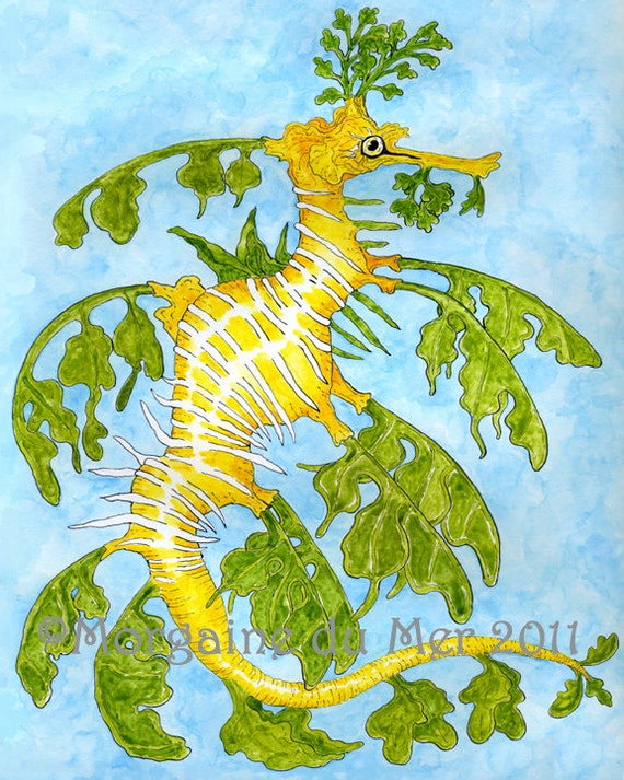 Leafy Sea Dragon Fine Art Print Unusual Sea Creature