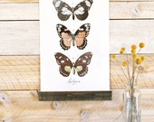 Lepidoptera Vol.1 - Mini wall hanging, wood trim and printed on textured cotton canvas. Vintage Science Posters