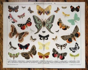 1894 ANTIQUE BUTTERFLY & MOTH lithograph original antique insect print