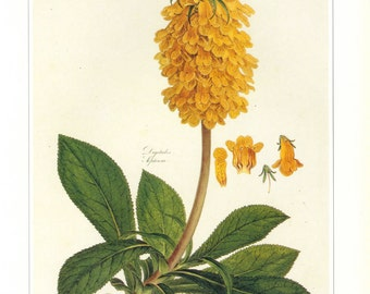 Vintage Botanical Print Flower Yellow SALE~~ Buy 3, get 1 Free