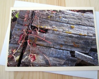 Ecosystem Blank Greeting Card Photography