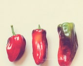 food photography, kitchen wall art, red hot peppers, chili, red green, minimalist, vegetable garden, spicy, chef cooks gift, southwest decor