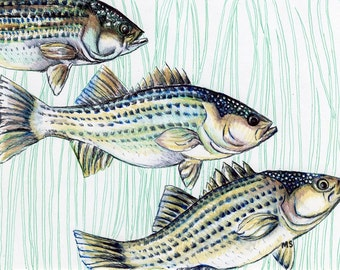 "Bass Fish Art  - Fish Illustration - Nautical Art - Pen and Ink Print - Gift For Him - 8 x 10"" Art Print - Beach Home Decor"