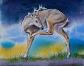 Young Buck Original Watercolor