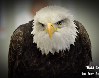 Wildlife Photography, Nature Photography, Bald Eagle Photos, Animal Photography, Bald Eagle, Mancave, Birds of prey,