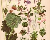 Flower Print, Vintage Farmhouse Wall Art, Rustic Bedroom Decor, Wildflowers, 1930 Botanical Plate 21