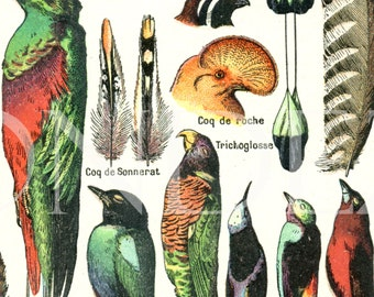 1922 Vintage feather print Antique feather poster Feather decor Bird decor Feather art Hat shop decor Feather illustration Feather gift