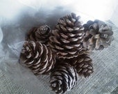 LARGE Ponderosa Pinecones/Woodland Wedding Decor / Fall - Winter Country Wedding // Rustic-Nature Inspired Crafts/ HOLIDAY Pine cones