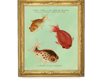 Goldfish Print, Fish Art,  Feng Shui Art, Goldfish Art, Natural History, Aquatic Print, Fish, Chinese Goldfish, Aquarium Fish Art