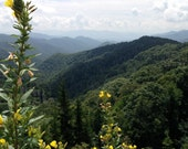 Photograph (8x10) of mountains and yellow flowers besides a road in Great Smoky Mountains National Park, Tennessee