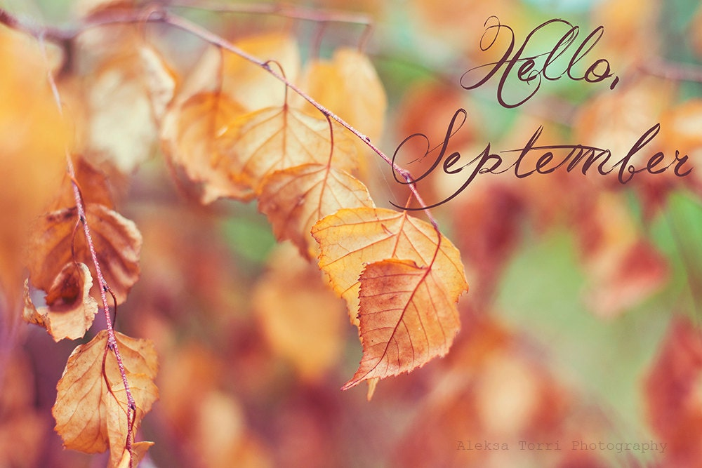 Photography, Photo, Fall, Autumn, September, Leaves, Golden, Gold, Orange, Tree, Fall tree, nature, forest, woodland, text