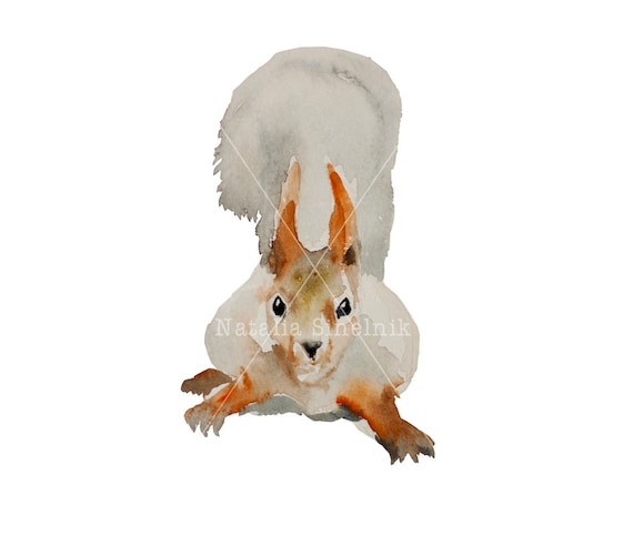 Red and grey squirrel digital download from original watercolor art nursery funny animal clipart