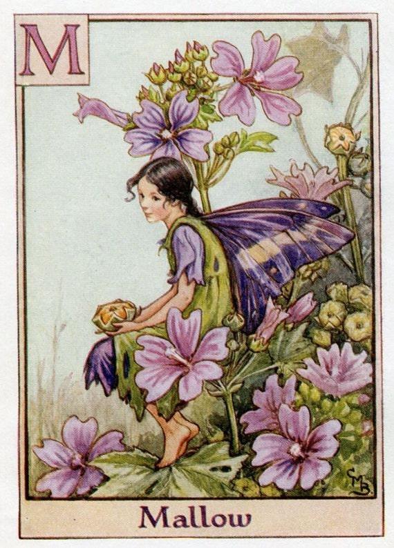 Mallow Flower Fairy Flower Fairy Vintage Print