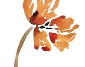 Texas gold - tulip, botan...