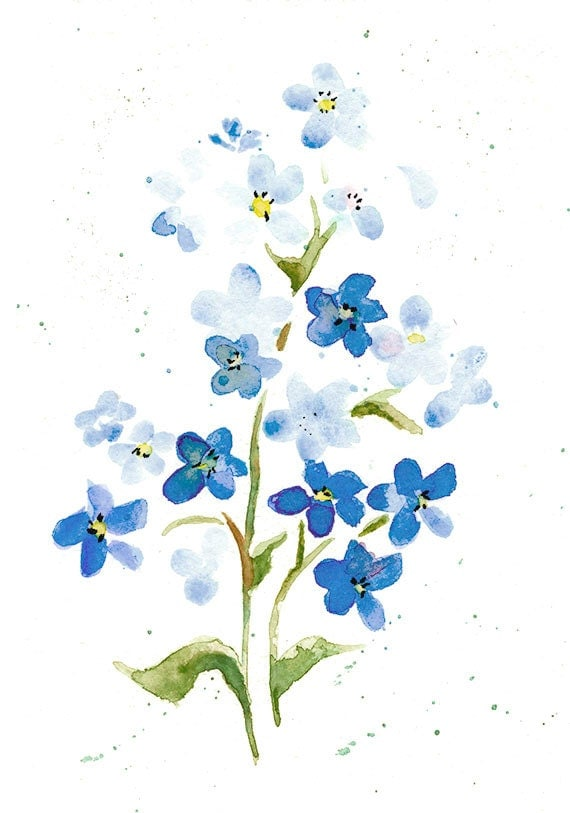 clip art forget me not flower - photo #49