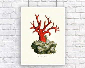 Large Red Coral 2 Nautical Vintage Style Art Print Beach House Decor