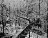 Nature Photography, Minimalist black and white wall decor, road less traveled, New England snow scene, life, for men,spiritual journey,women