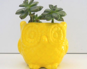 Ceramic Owl, Mini Planter, Desk Planter, Vintage Design, Lemon Yellow, Succulent Planter, Cactus Pot, Candle Holder, Kitchen Decor, Owl pot