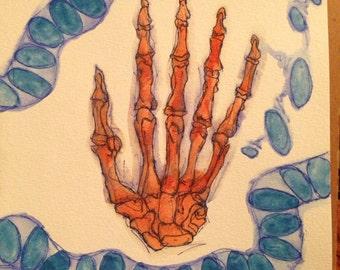 Anatomy study watercolor Hand (original)