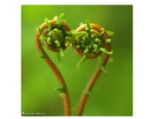 Fern Fronds Photograph Perfect Valentine Print Heart Photography Prints Nature Lover Woodland Scene Flower Botany Print