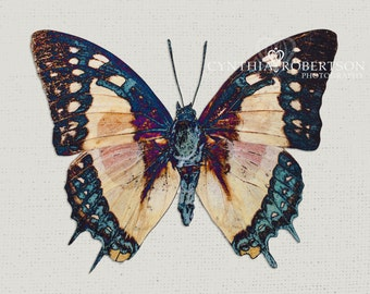 Butterfly, Fine Art Photography