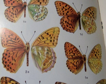 butterflies of britain and europe book