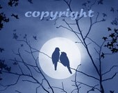bird art, love birds, art print, painting, animal, wildlfe, bird love, bird nest, full moon, moonlight, dark sky, feathers
