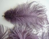 VOGUE OSTRICH PLUME, Fig Purple, Antique Lavender  / 500