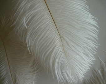 VOGUE OSTRICH PLUMES , Ivory, Cream, 2 pieces / 549