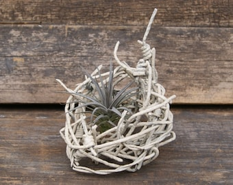 Vintage Wire Basket - Wire Art - Barbed Wire - Airplant Planter