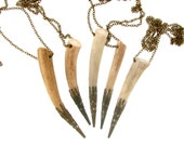 Filigree Tipped Naturally Shed Deer Antler Tine Necklace in Antique Bronze