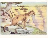 1926 Animal Print - Mountain Lion - Vintage Antique Natural History Home Decor Art Illustration for Framing