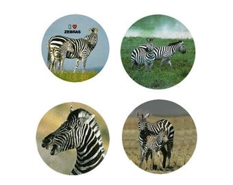 Zebra Magnets:  4 Cool Zebras for your home, your collection,  or to give as a unique gift