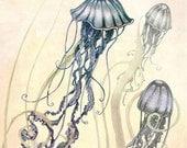Jellyfish Print  - Ocean Art  Print - Nautical Seaside Art -  Print -  purple - blue - Yellow - COLOR - plum