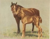 """HORSES mother and colt CW Anderson artist illustration, vintage printing  8"""" x 10""""  one print"""