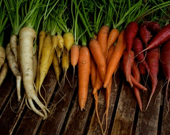 Colourful Carrot Mix - Rainbow of Heirloom Seeds