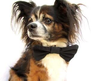 Dog Bowtie-Black clip on bow tie