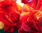 """Bougainvillea-Hanah Silk Velvet Ribbon-3 yds., 1.5"""" wide"""