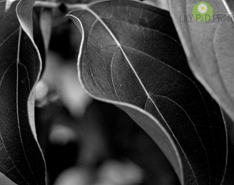 Leaf photograph  Leaves in detail black and white fine art print nature photography black and white photography New England home decor