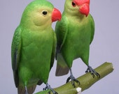 Pair of Peach-faced Lovebird No.3 Hand Carved Wooden Bird