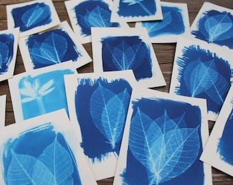 Original cyanotype leaf, cyanotypes, sun print, blue leaf, blue home decor, fine art photography, leaves, autumn leaves, alternative process