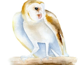 Barn Owl Watercolor Painting - Giclee Print - 8 x 10 - 8.5 x 11