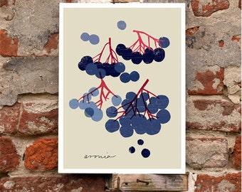 "Black Chokeberry - Deep blue Aronia - Fruit art print  -  11""x15"" - archival fine art giclée print"