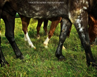 Horse Print, Mustang Legs - Mustang Horse Rescue