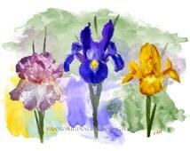 IRIS Irises Limited Edition Fine Art Giclee Print 13 x 19 signed Purple Yellow Blue Garden Flowers Watercolor