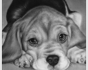 Beagle Cute Dog Animal Sweet Puppy Pet Canine Zindy Nielsen