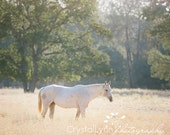 White Horse Fine Art Photograph