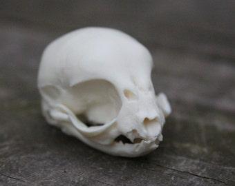 kitten skull replica
