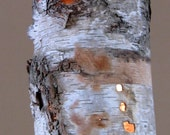 Hanging Birch Bark Lamp/Light